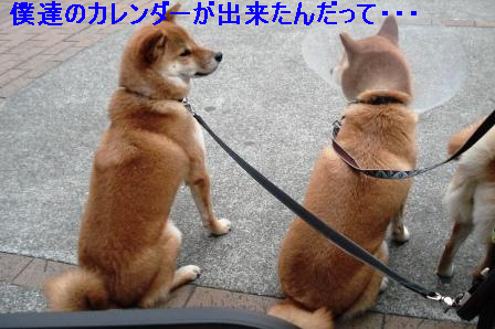 1_20100115081217.jpg