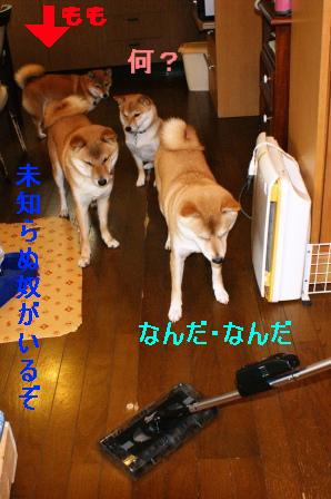 2009_12120004.jpg