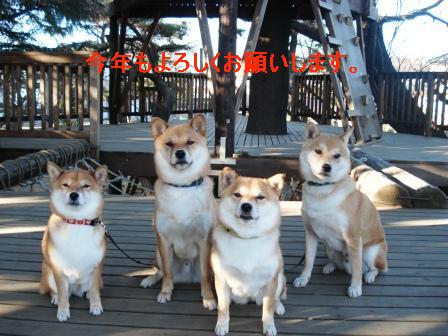 2010_01010019.jpg