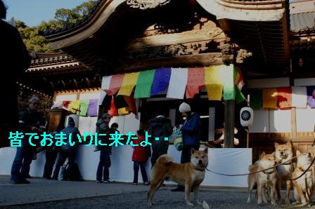 2010_01100021.jpg