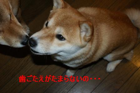 2010_01100052.jpg