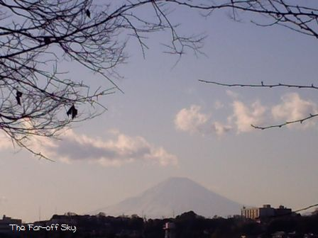 2010-01-03-03.jpg
