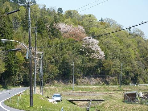 県道782号線01