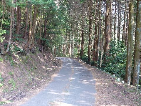 府道50号線_杉並木