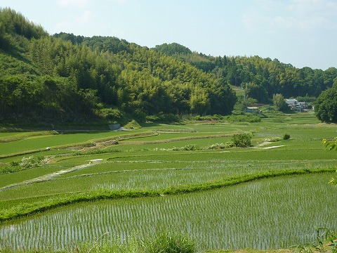 県道47号線の田んぼ