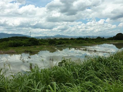 桂川河川敷の畑