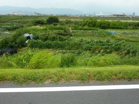 桂川CR_強い南風