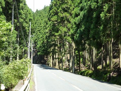 深見トンネルまでの杉並木