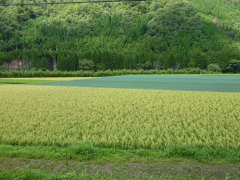 府道38号線沿いの田園風景