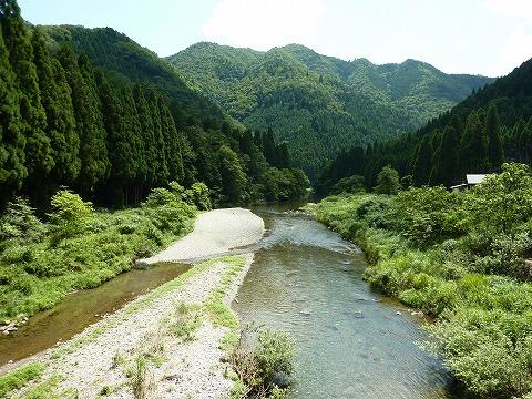 由良川と山