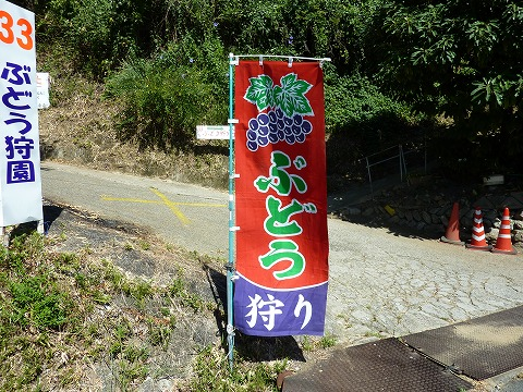 竜田越古道08_ぶどう園幟
