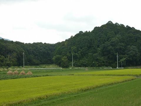 篠山市の山と田んぼ