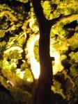 ヤケニ目立つ木