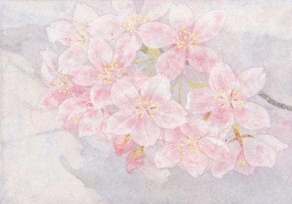 sakura mini