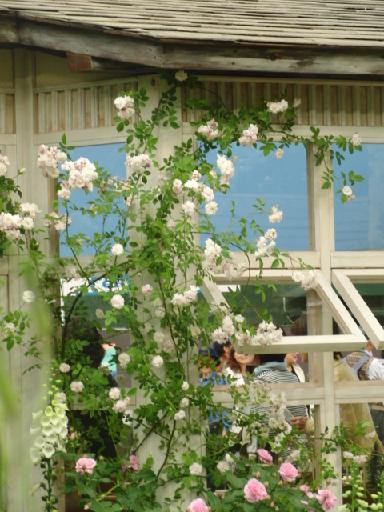 バラの小屋2