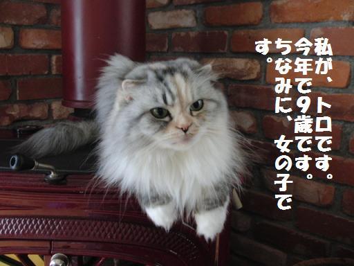 Toro-can1.jpg