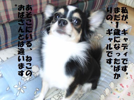 toro-can2.jpg