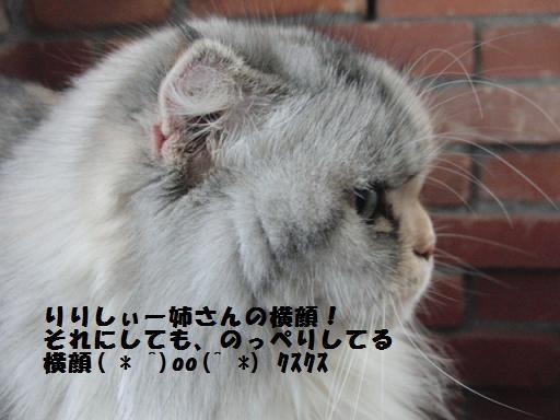 toro-can6yoko.jpg