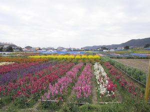 千倉 花畑
