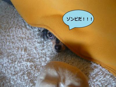 003_convert_20100613235144.jpg