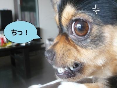 003_convert_20100717084722.jpg