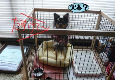 003_convert_20101126164411.jpg