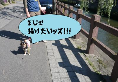 005_convert_20101023215256.jpg