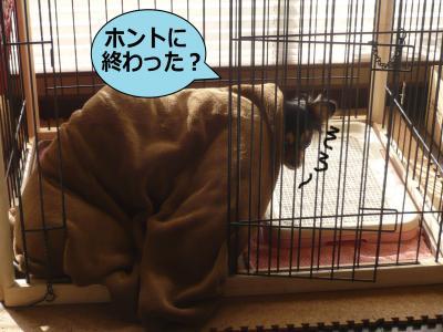 繧ゅ§繧ゅ§_convert_20091206102322