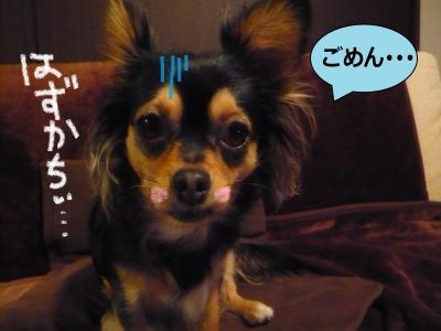 縺ッ_convert_20091208093211