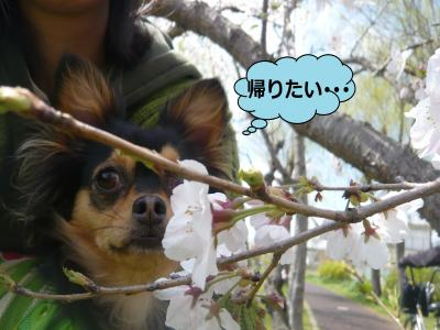 縺九∴繧祇convert_20100412171111