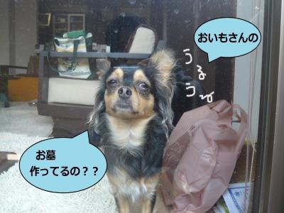 286_convert_20100608005434.jpg