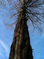 一本の木(小)