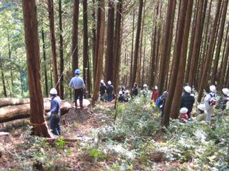 杉・桧の伐採体験