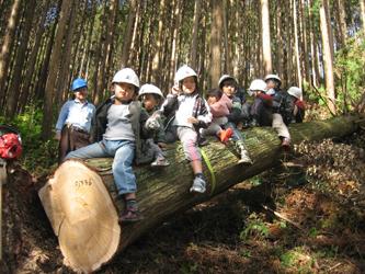 杉・桧の伐採体験4