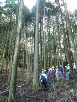 伐採体験、見学ツアー「与作ツアー」