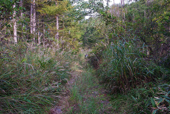 20101017八ヶ岳林道111