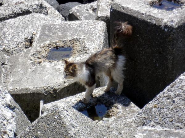 茜浜の猫21