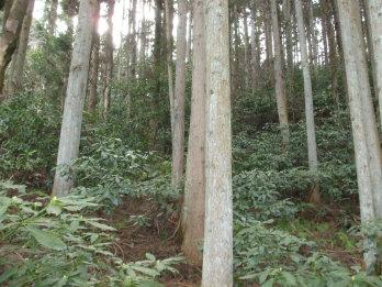 atagoyama2-4.jpg