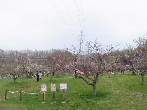 平岡公園16