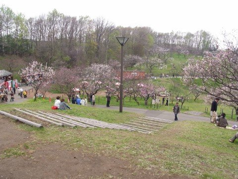 平岡公園15