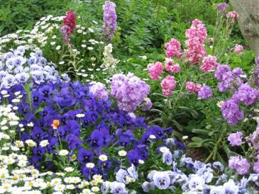 2010噴水のある公園:お花1