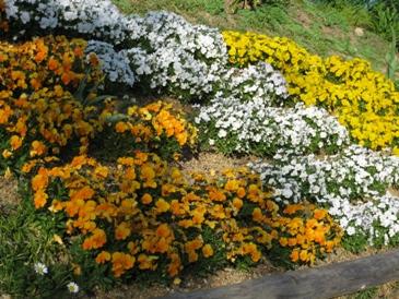 2010噴水のある公園:お花2