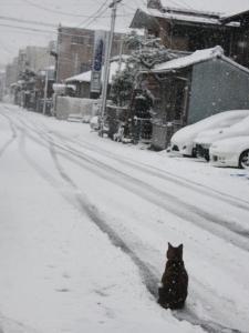 2011_01_16_9999_12.jpg