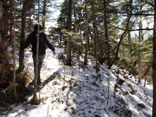 東篭ノ登山の樹林帯