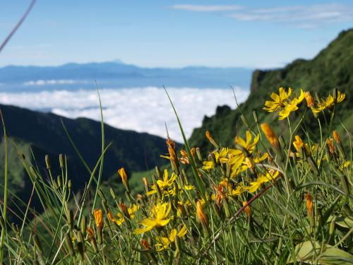 高嶺の花、をイメージしてみた