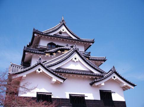 10hikonejyo2-1.jpg