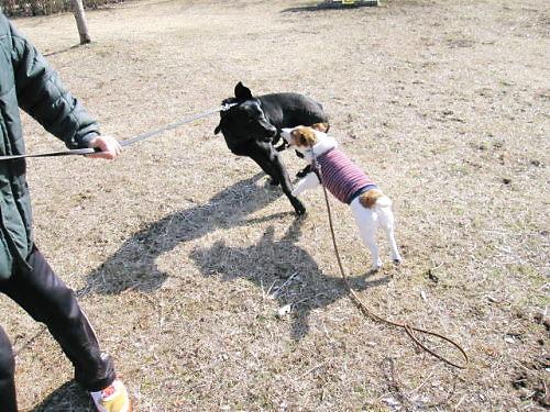 2011長岡公園157