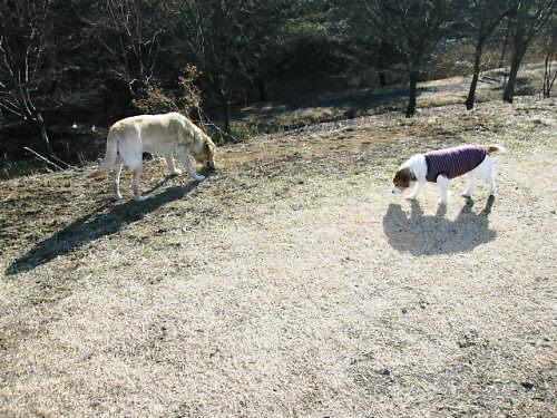 2011長岡公園160