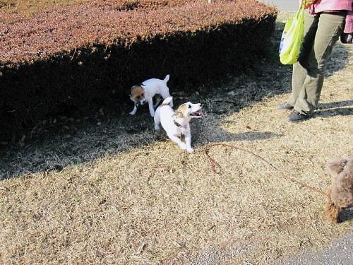 2011長岡公園166