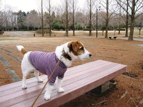2011長岡公園171
